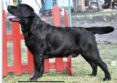 Kamila and Raven's Sire